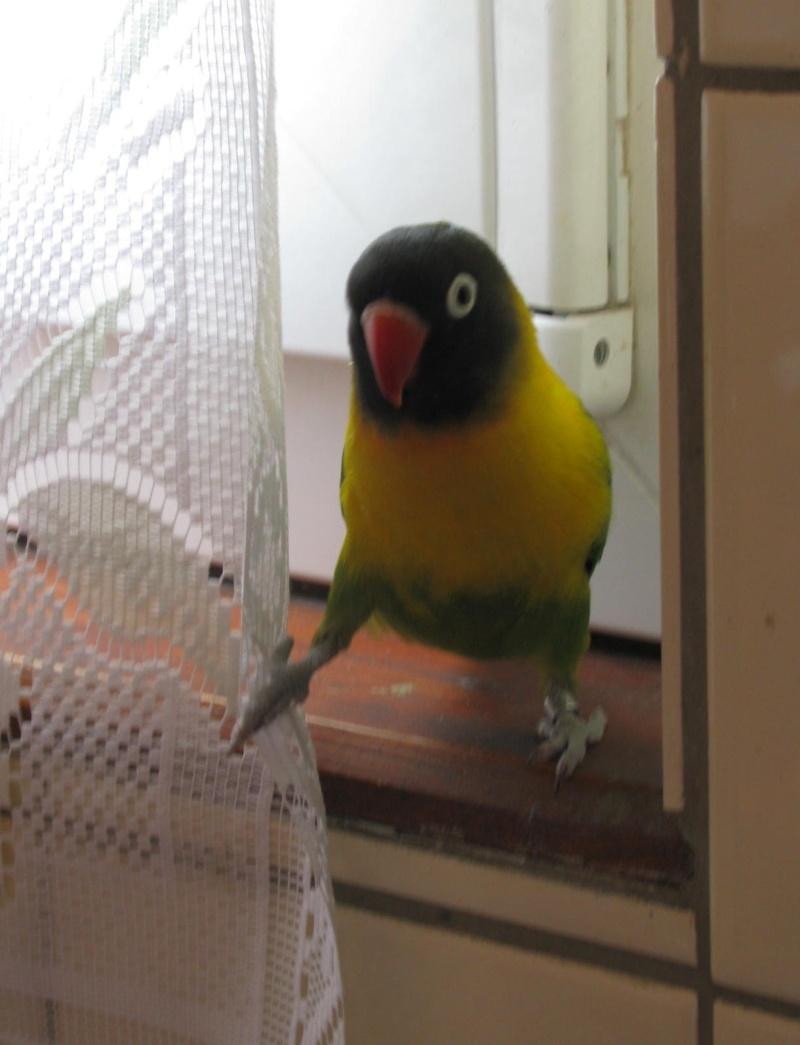 http://www.les-oiseaux-exotiques.com/f119-concours-beaute-autres- Img_0910