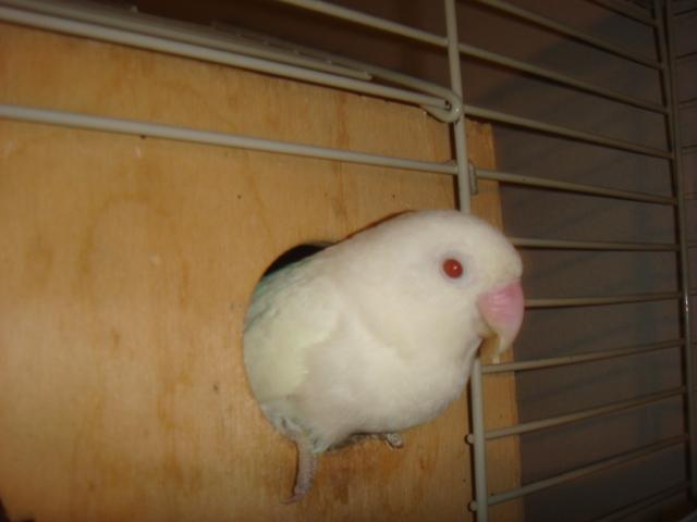 http://www.les-oiseaux-exotiques.com/f119-concours-beaute-autres- Perso_10