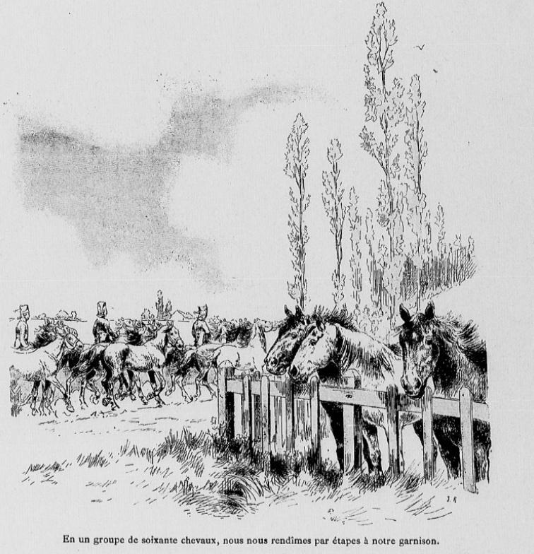 Convoyage de chevaux de rechange pour les déplacements. Mymoir10