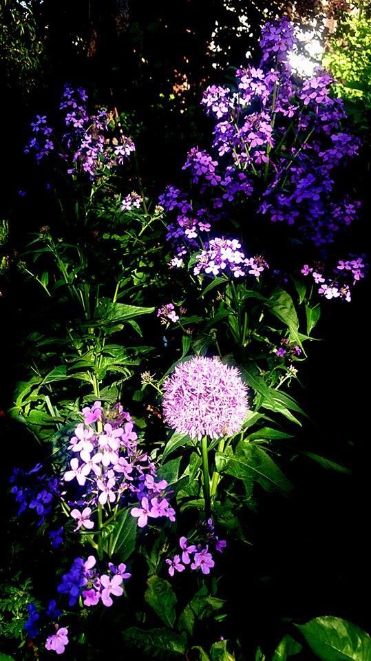 Begleitpflanzen der Kakteen in Haus und Garten - Seite 23 Blaue_10
