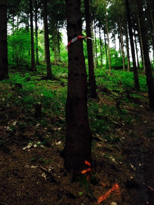 [02] Randonnée de St nicolas au bois le 26 avril 2015 - Page 6 Image15