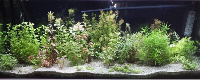 mon 240L planté - Page 2 Aquari10