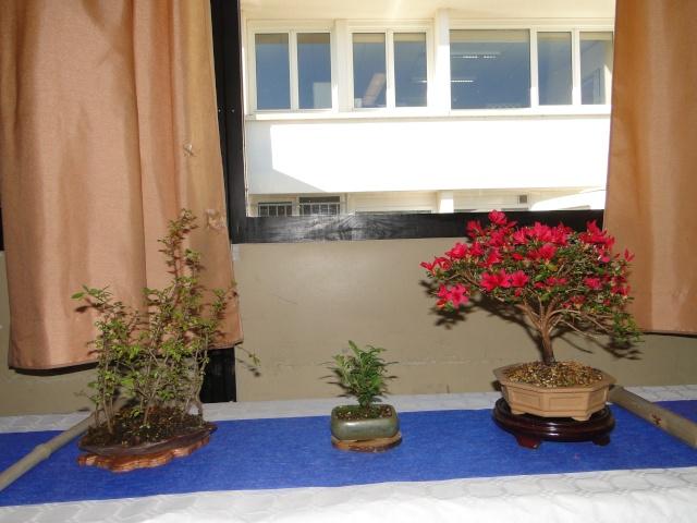 9 ème fête des plantes Merdrignac (22) 2015 02210