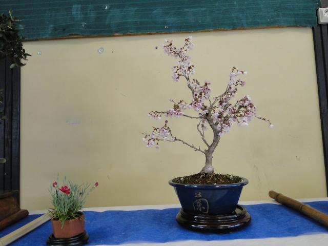 9 ème fête des plantes Merdrignac (22) 2015 Dsc07313