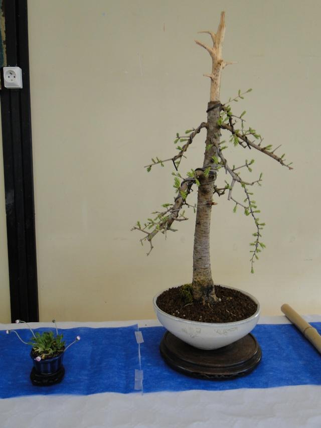 9 ème fête des plantes Merdrignac (22) 2015 Dsc07314