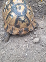 identification tortue 20190613