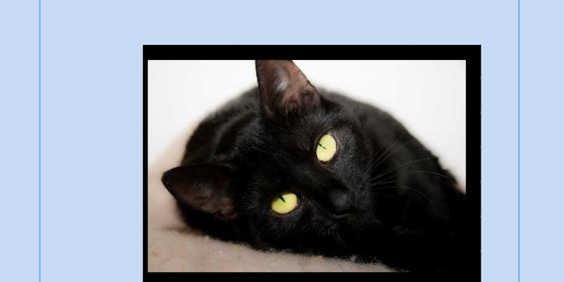 Puzzle #12 - Le Chat noir 1ab10