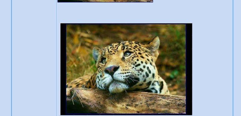 Puzzle #34 - Le léopard Puzzle10