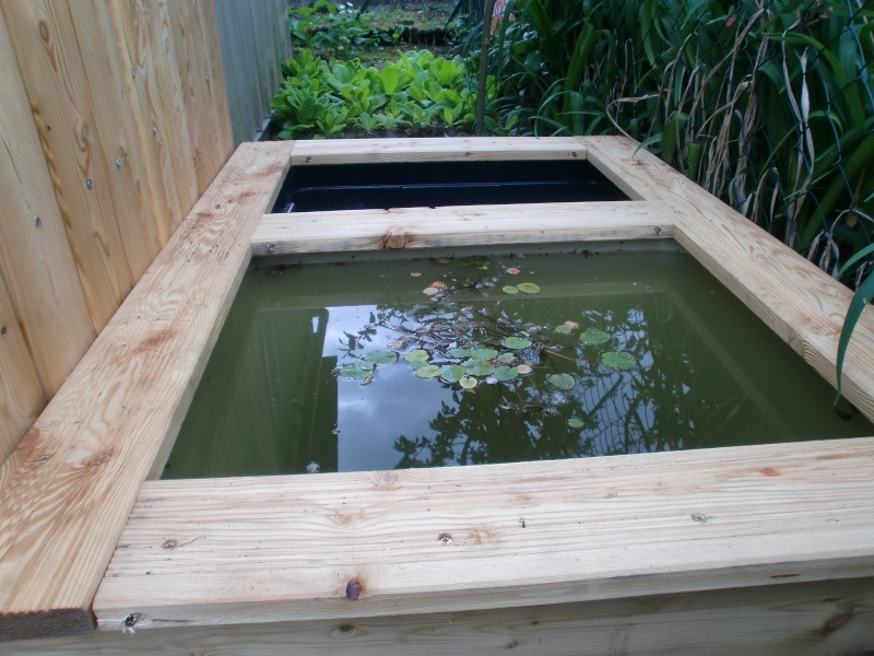 mon mini bassin de 300l Cimg1117