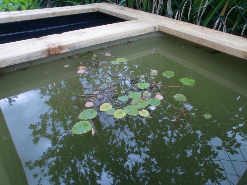 mon mini bassin de 300l Cimg1118