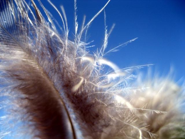 Les Sept Plumes de l'aigle, Henri Gougaud. Photo-10