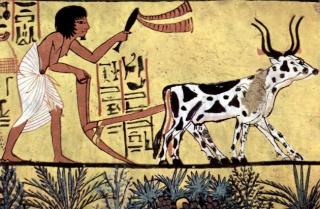 Le ossa degli antichi erano più forti? Aratro10
