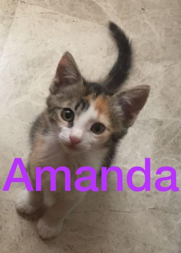 VOYAGE DES 24 & 25 AOUT 2018 Amanda10