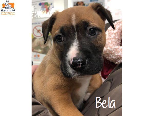 BELA - X BOXER - SOLE Bela110