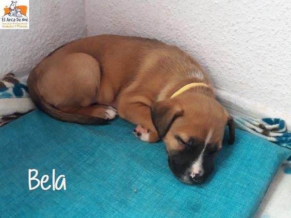 BELA - X BOXER - SOLE Bela_310