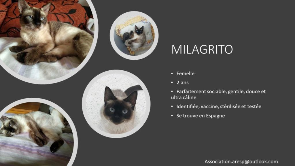 MILAGRITO - X SIAMOISE- CEMUPROAN Diapos33