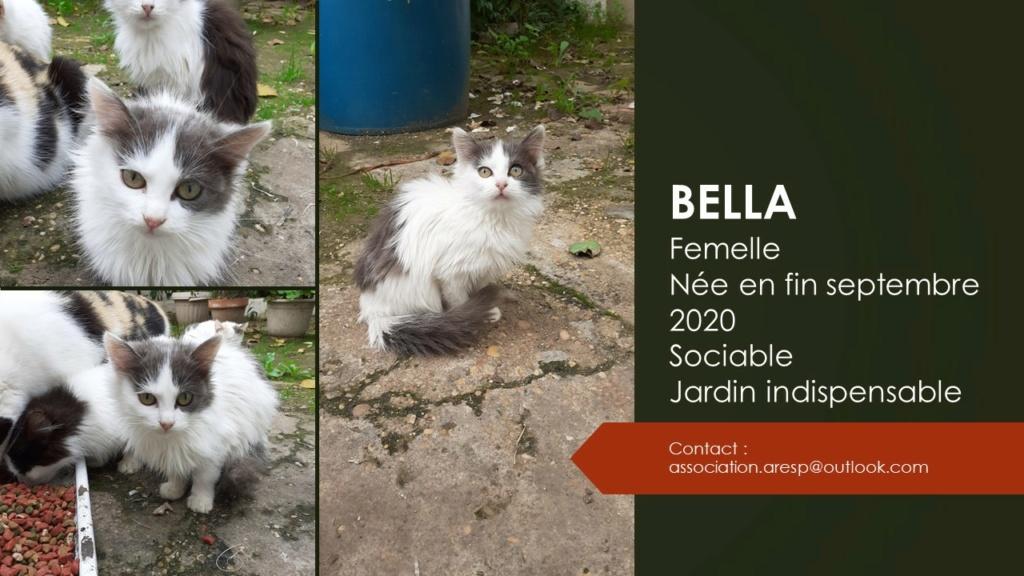 BELLA - POILS LONGS - MA VA Diapos34