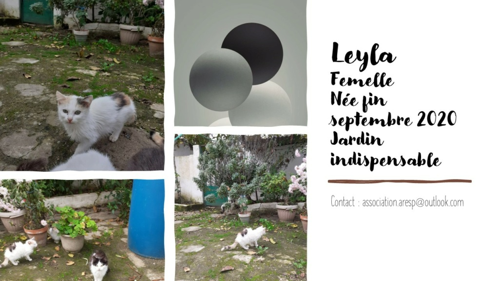 LEYLA - POILS LONGS - MA VA Diapos35