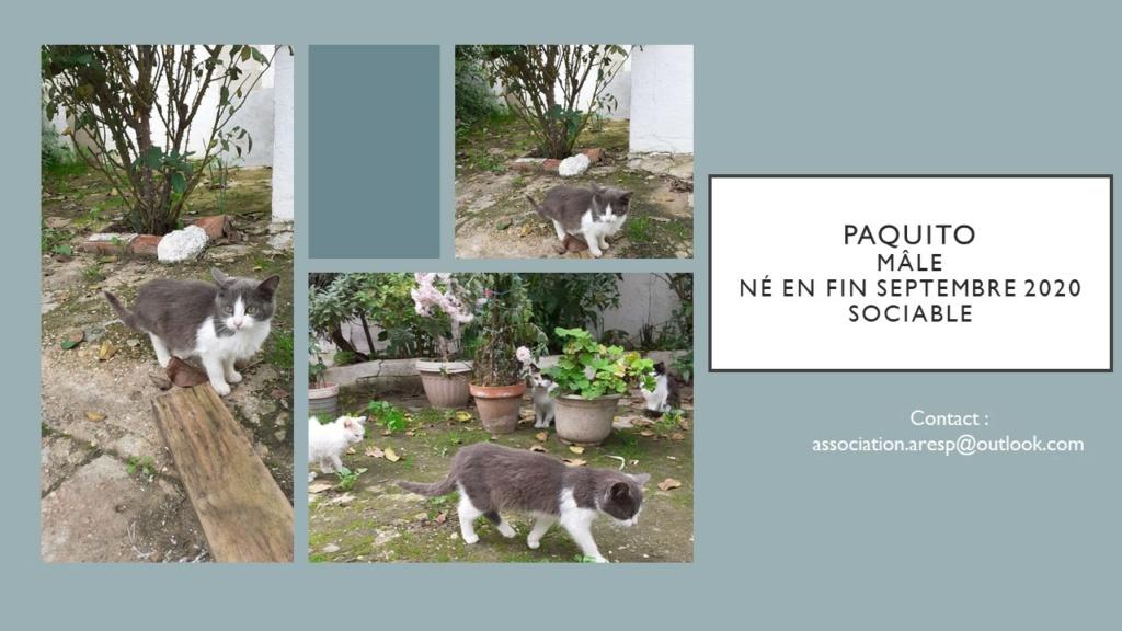 PAQUITA - GRISE ET BLANCHE - MA VA Diapos37