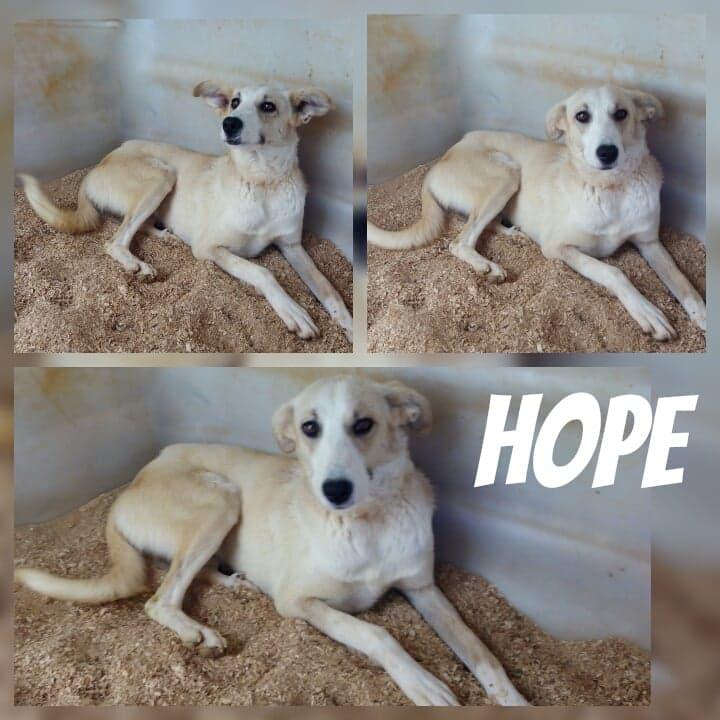 HOPE - ES (Raquel)  H111