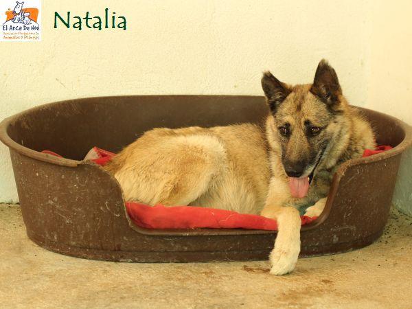 NATALIA - CROISEE BA - SOLE P1907110