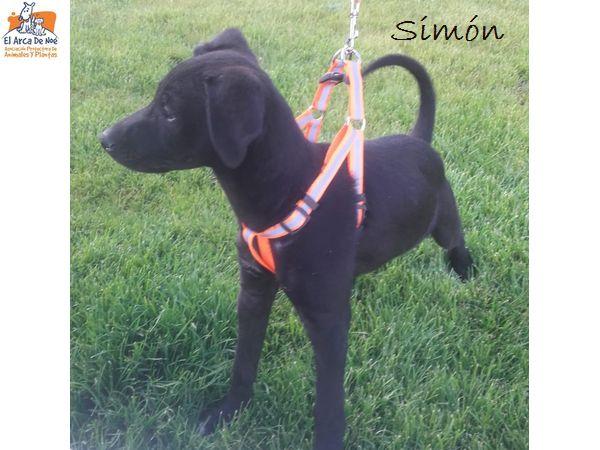 SIMON - NOIR - ES (Sole)  Whatsa68