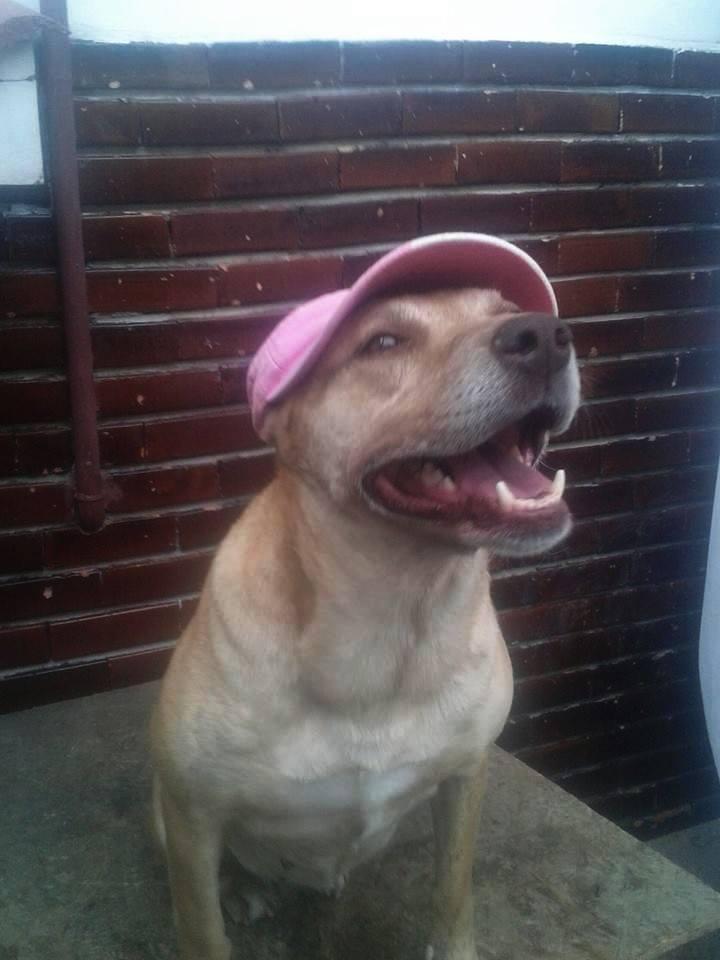 Tina, chienne sauvée de la rue, née en avril 2010  11258610