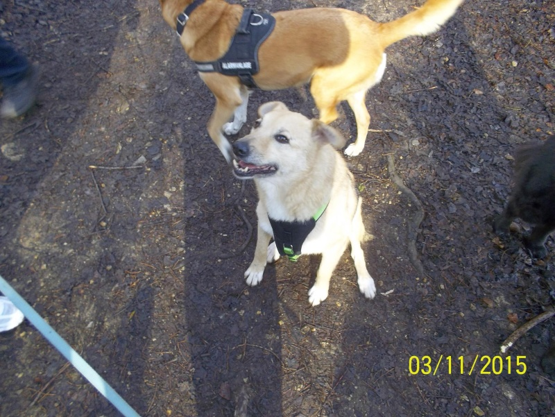 Pongo, chien des rues, né en 2009, très affectueux !! Pongo_11