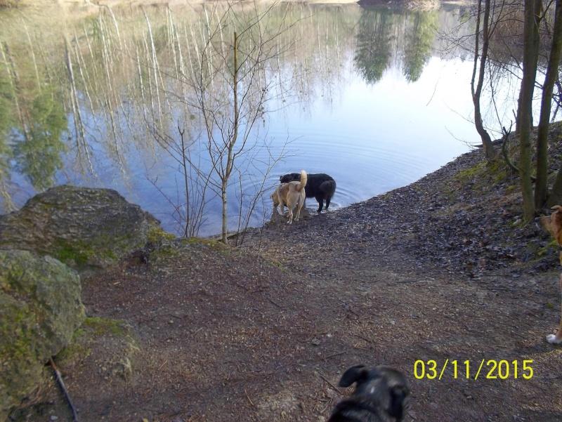 Pongo, chien des rues, né en 2009, très affectueux !! Pongo_13