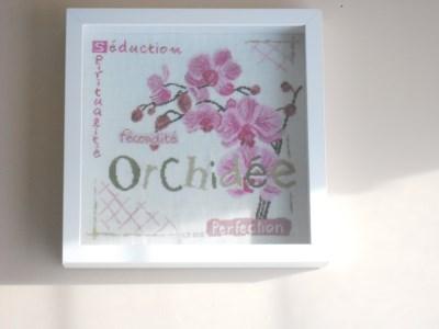 SAL Lilipoint Orchidée - FINI Dscn3720