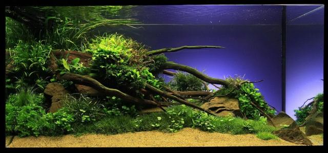 Let's go pour un nouvel aqua 80l Aquari10