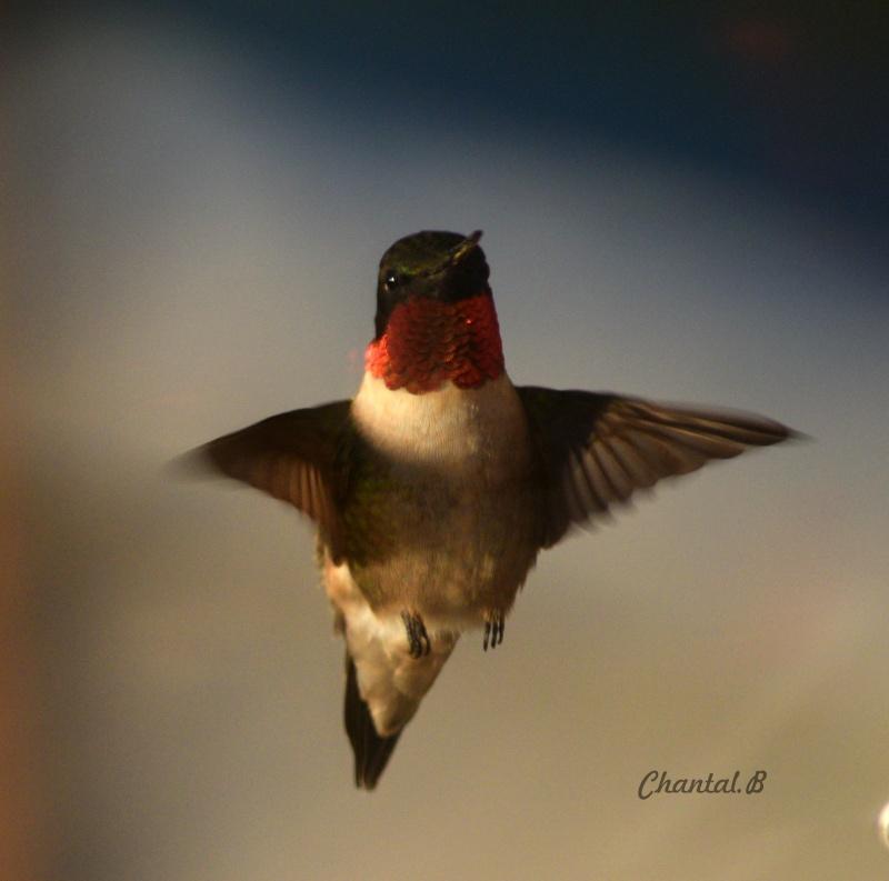 serie colibri 215