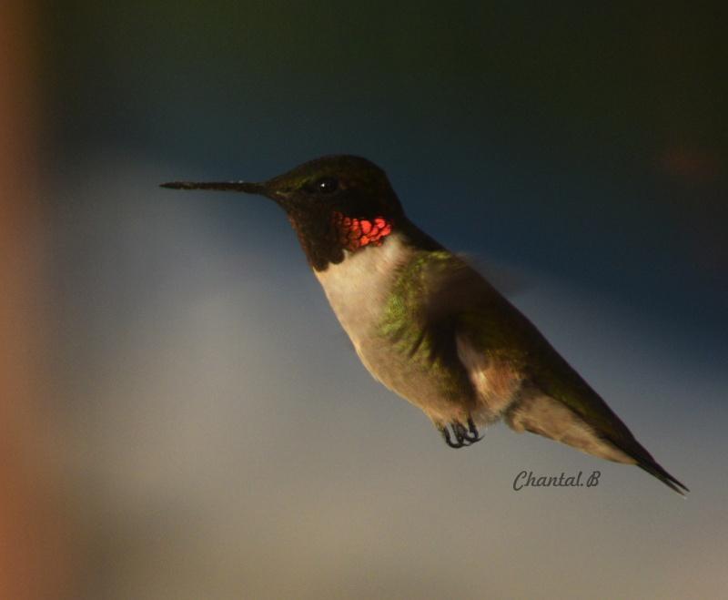 serie colibri 413