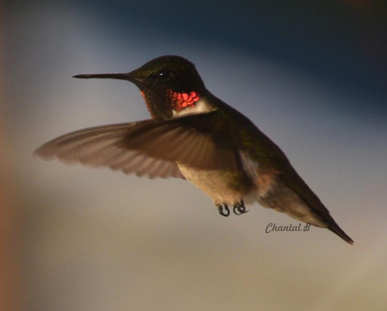 serie colibri 512