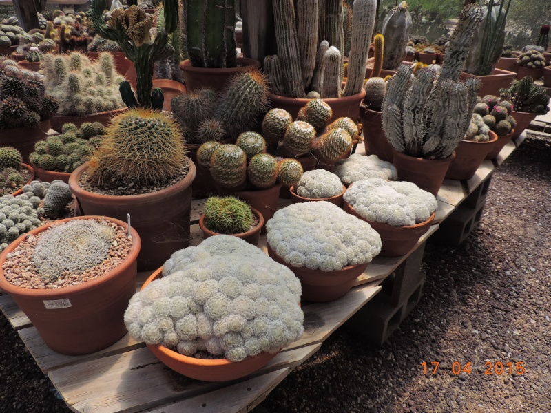 Cacti and Sukkulent in Köln, every day new flowers in the greenhouse Part 121 9168010