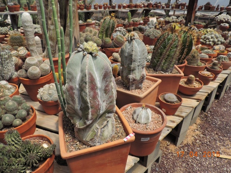 Cacti and Sukkulent in Köln, every day new flowers in the greenhouse Part 121 9170710