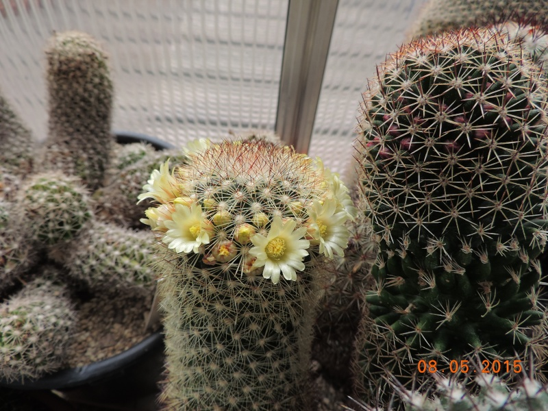 Cacti and Sukkulent in Köln, every day new flowers in the greenhouse Part 122 Bild_104