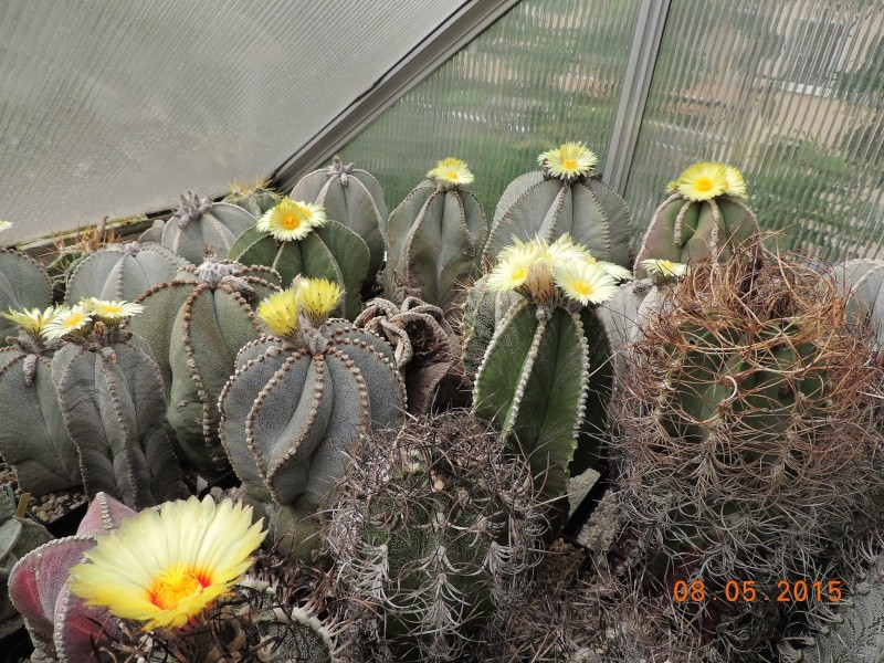 Cacti and Sukkulent in Köln, every day new flowers in the greenhouse Part 122 Bild_109
