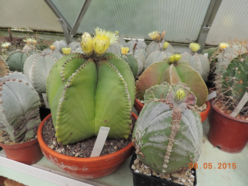 Cacti and Sukkulent in Köln, every day new flowers in the greenhouse Part 122 Bild_129