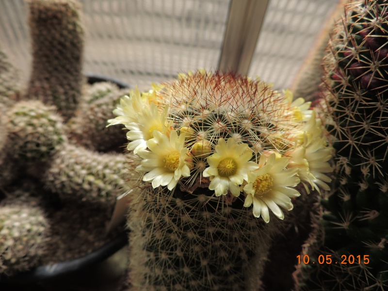 Cacti and Sukkulent in Köln, every day new flowers in the greenhouse Part 123 Bild_163