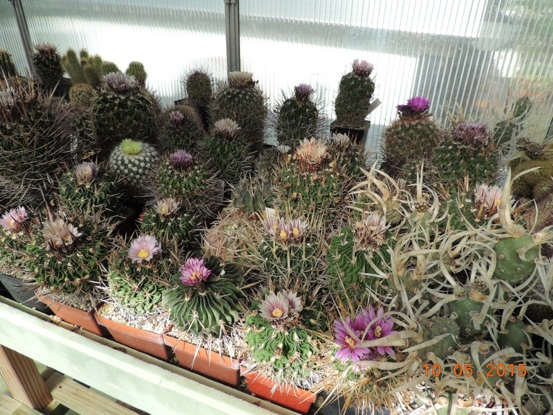 Cacti and Sukkulent in Köln, every day new flowers in the greenhouse Part 123 Bild_166