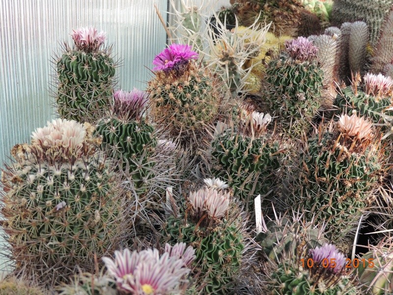 Cacti and Sukkulent in Köln, every day new flowers in the greenhouse Part 123 Bild_167