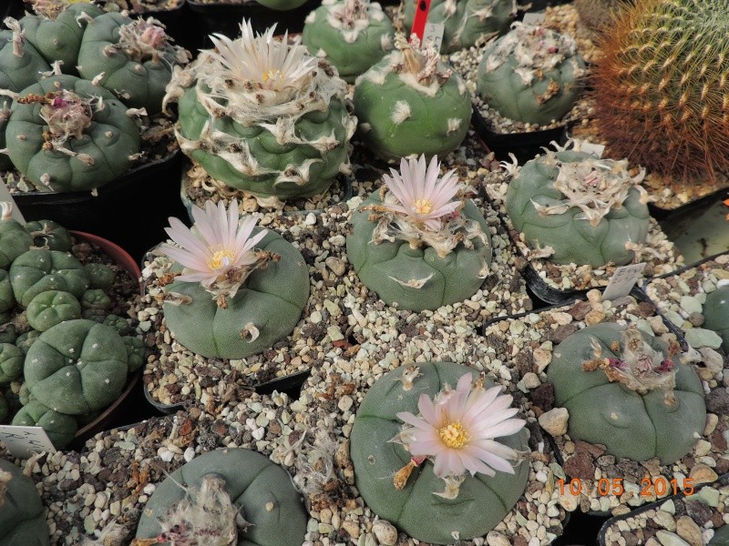 Cacti and Sukkulent in Köln, every day new flowers in the greenhouse Part 123 Bild_179