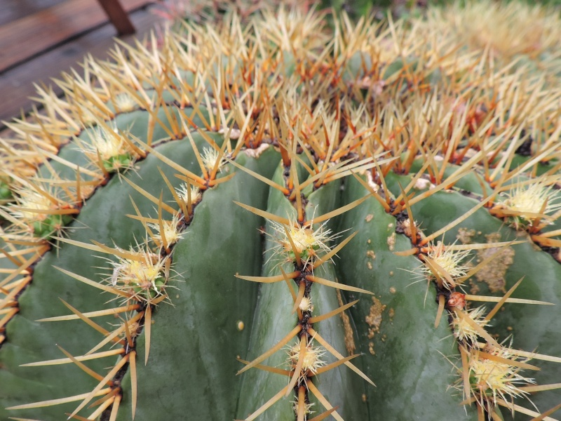 Cacti and Sukkulent in Köln, every day new flowers in the greenhouse Part 123 Bild_187