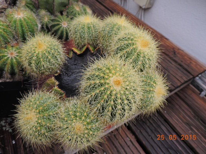 Cacti and Sukkulent in Köln, every day new flowers in the greenhouse Part 123 Bild_190