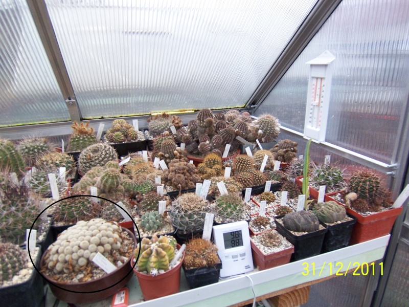 Cacti and Sukkulent in Köln, every day new flowers in the greenhouse Part 123 Bild_221
