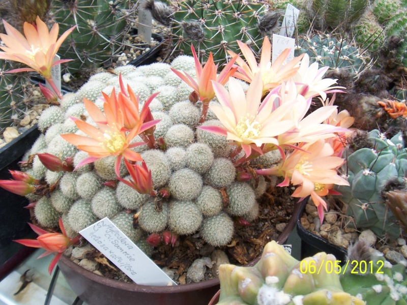 Cacti and Sukkulent in Köln, every day new flowers in the greenhouse Part 123 Bild_222