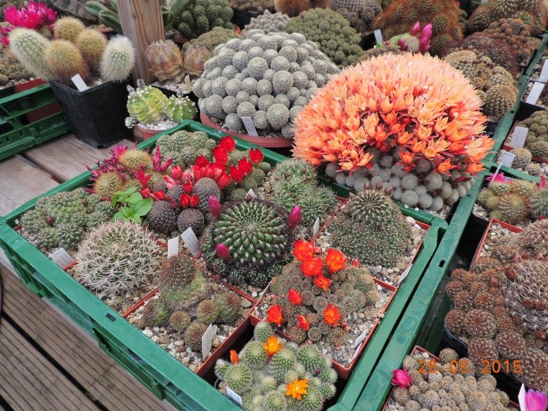 Cacti and Sukkulent in Köln, every day new flowers in the greenhouse Part 123 Bild_227