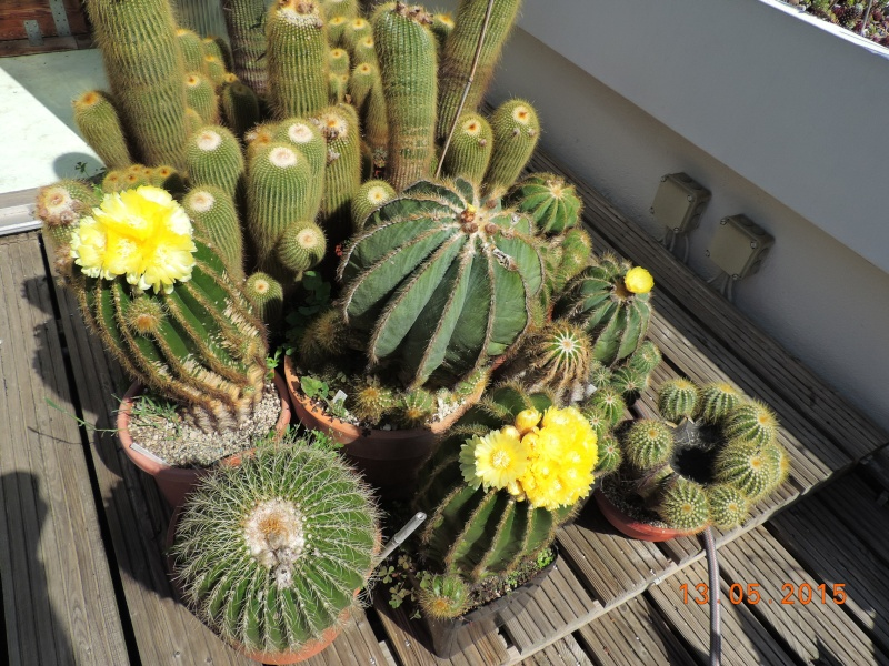 Cacti and Sukkulent in Köln, every day new flowers in the greenhouse Part 123 Bild_230