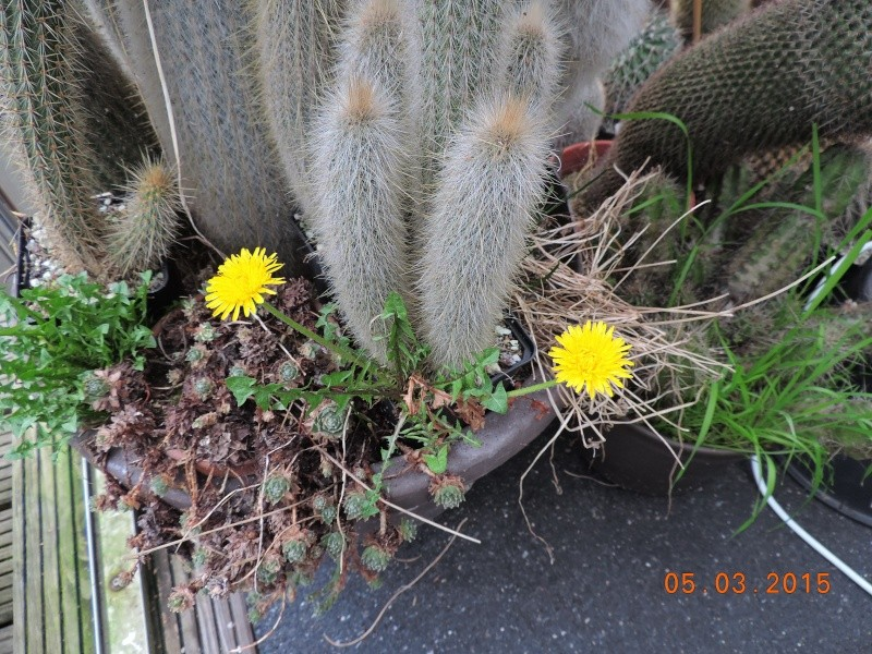 Cacti and Sukkulent in Köln, every day new flowers in the greenhouse Part 120 Bild_810